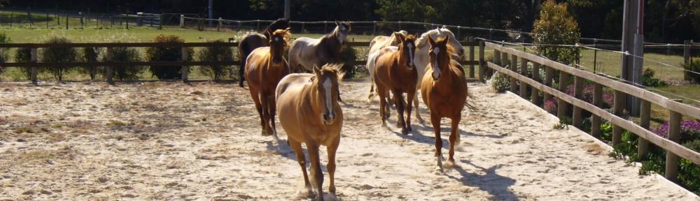 Horses running2