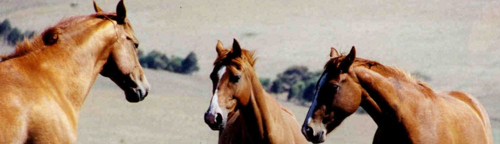 horse meeting4